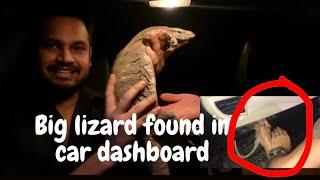 FOUND BIG LIZARD IN CAR DASHBOARD | AZLAN SHAH