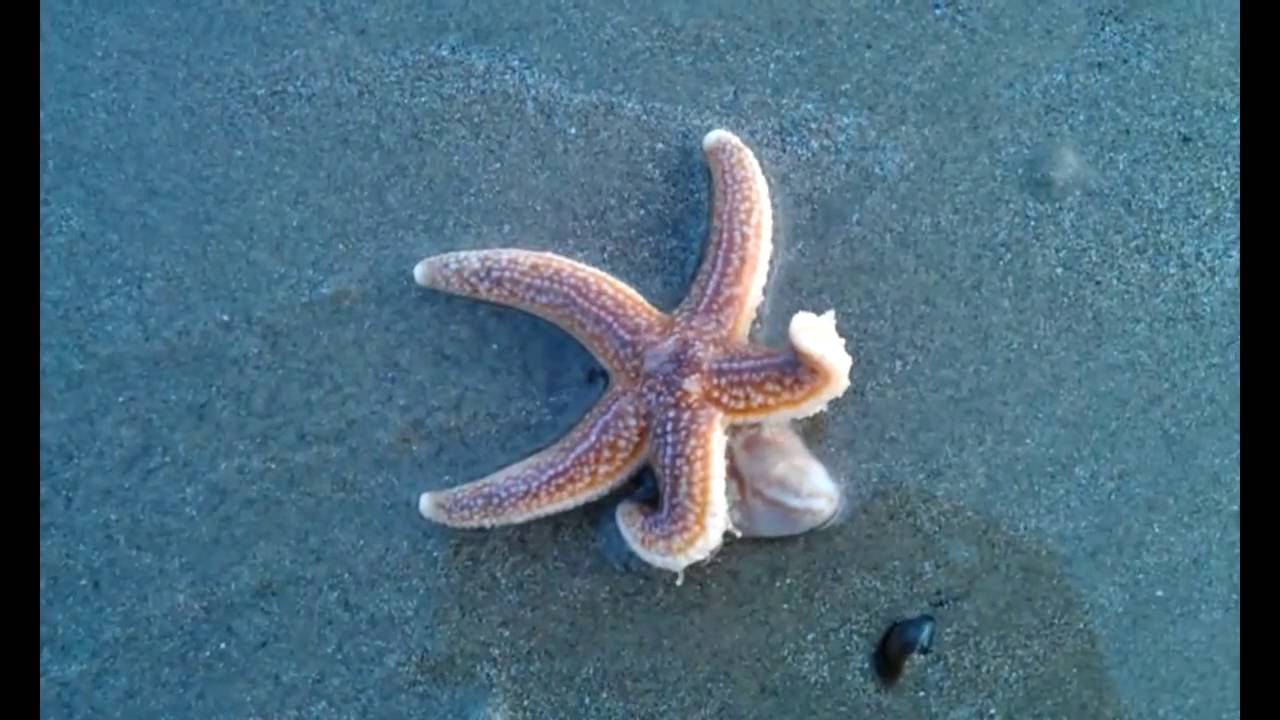 "a brief look at the sea star or starfish Starfish vs sea stars but the most important fact i learned pertains directly to the name ""starfish,"" and whether it–or ""sea star""–is the correct."
