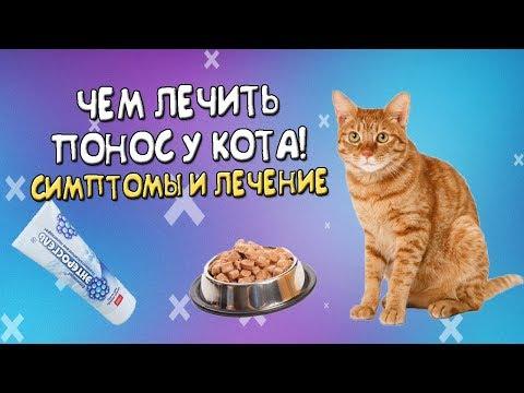 Что делать если понос у кота? Чем лечить!