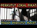 Perkutut Lokal Pikat Masteran Perkutut Lokal  Mp3 - Mp4 Download