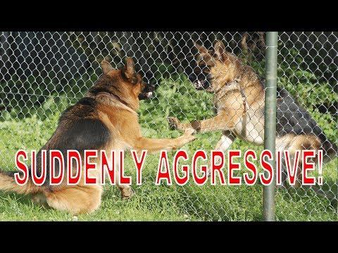 Our German Shepherd Dog is Suddenly Aggressive - Dog Training Advice