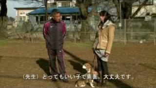 犬しつけ(藤井聡) DVD http://bit.ly/2CBhuej 2017年12月22日PM11:00...