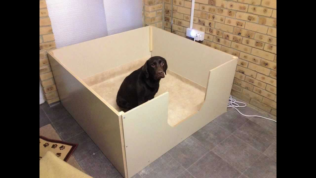 Ruby the Chocolate Labrador - whelping box 'The Big Build