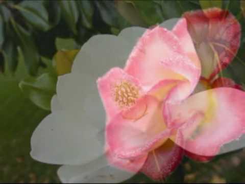 Dan Locklair  Summer from Symphony of Seasons (Symphony No. 1)