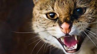 تحميل صوت قطة طبيعي mp3