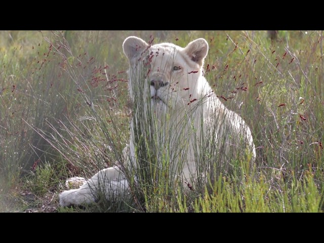 Panthera Africa: Visit the big cats