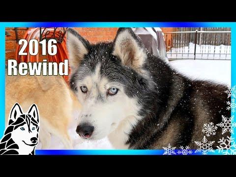 HUSKY REWIND 2016 Best Moments of 2016 Rewind