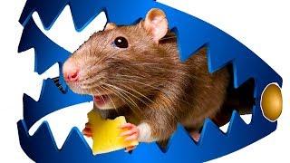 СИМУЛЯТОР маленькой КРЫСЫ / приключение мыши в веселой, развлекательной игре от КИДА #ПУРУМЧАТА