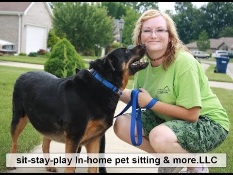 11 Dog Walking Tips by Muncie Pet Sitter