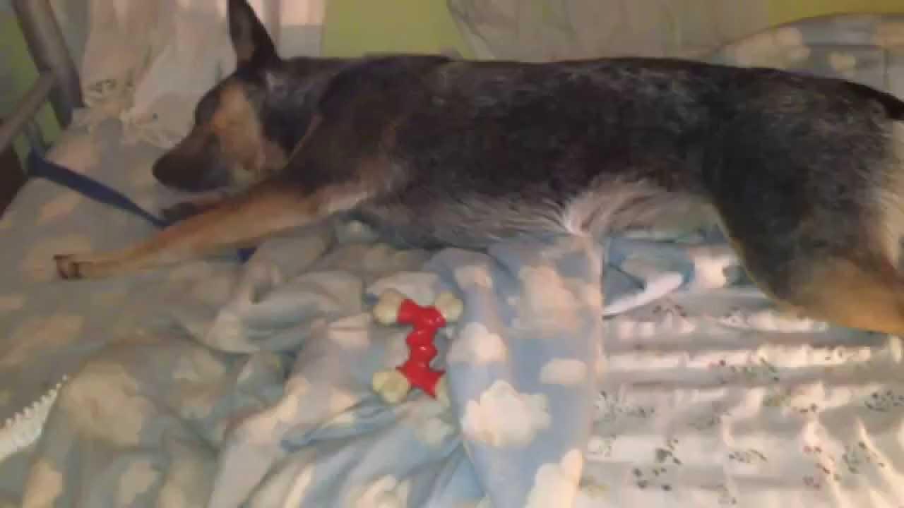 Dog hogging the bed - Dog Hogging The Bed 56