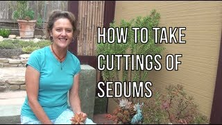 How To Take Cuttings Of Sedums