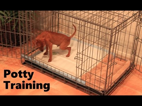 Potty Training Puppy Apartment - Official Full Video - How To Potty Train A Puppy Fast & Easy