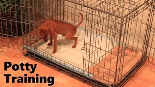Potty Training Puppy Apartment - Full Video