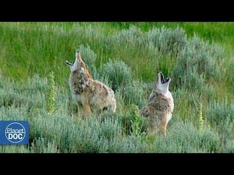 Parque Nacional Yellowstone - Parte 2