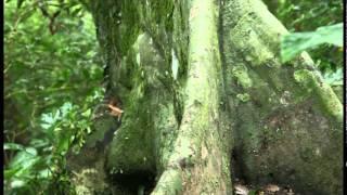 綠活台灣~生態旅遊短片--Tropical Fantasy