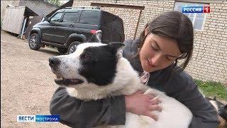 Костромские волонтёры рассказали, как спасают брошенных животных