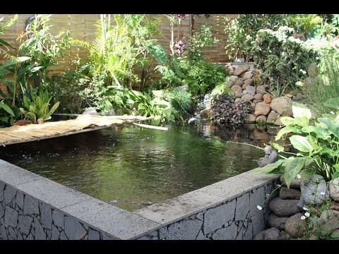 Le bassin a koi de Kity  la Runion  YouTube
