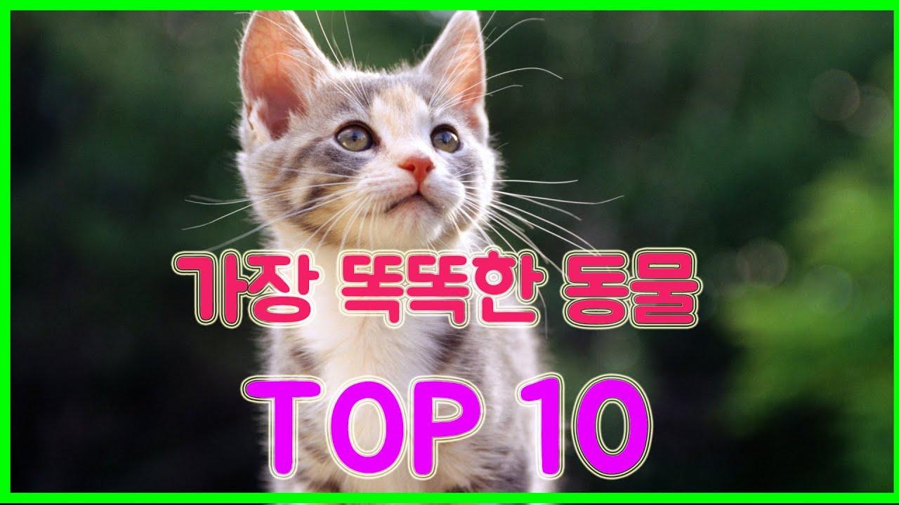 [신기한이야기] 가장똑똑하고IQ가 높은 동물 순위 TOP 10!!