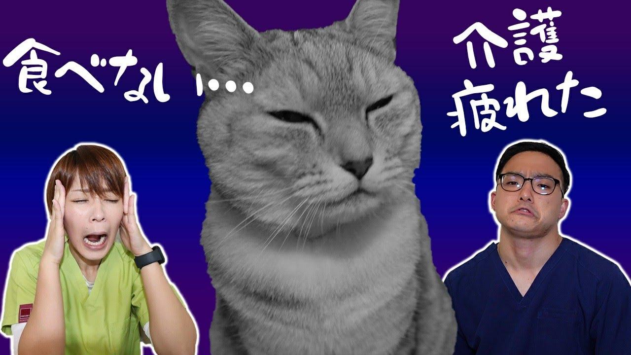 【猫の介護】寝たきりになっても大丈夫!!~よくある相談を獣医が解決~