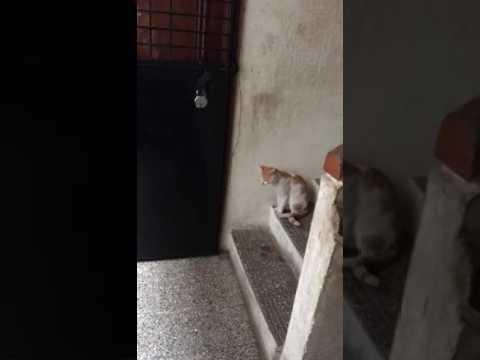 Как кот стучит в дверь видео