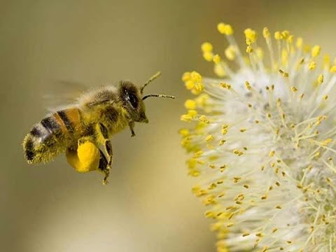 Bee Pollen Health Benefits And How To Collect It