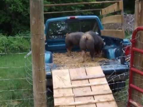 Hog Trough Food Truck