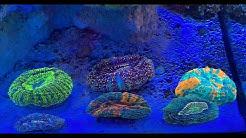 Meerwasser Böttcher spezial: Besondere Tiere für das Sommerfest bei Royal Exclusiv
