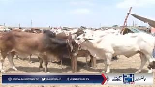 Fake Teeth animals spotted in Karachi