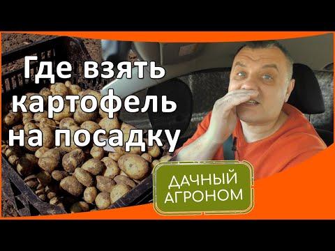 Где взять картофель на посадку: 3 источника семенной картошки