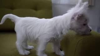 PADOG関東の子犬販売情報詳細はこちらhttp://dog-lien.com/puppy/479.