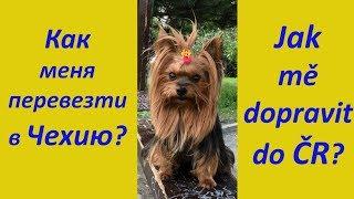 Как перевезти собаку в Чехию/Перевозка животных за границу/Документы