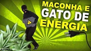 O que MACONHA tem a ver com GATO DE ENERGIA? 🍁