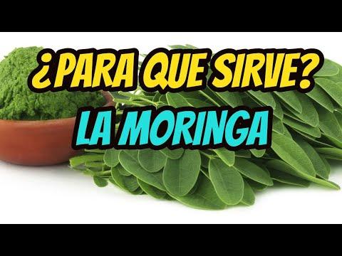 la-planta-moringa-y-sus-7-propiedades-medicinales-y-curativas.