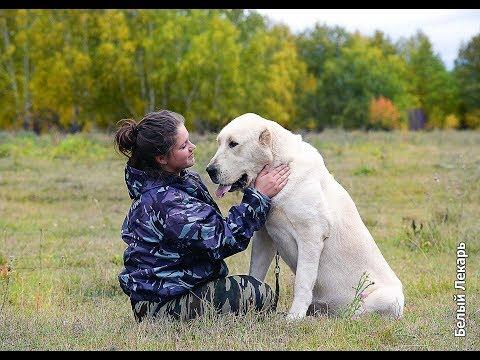 Питомник собак  на Урале - Белый Лекарь - Http://www.beliy-lekar.ru