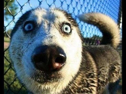 Смешные видео приколы про собак смотреть онлайн