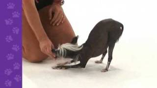 """Teach Your Dog To """"take A Bow"""" (excerpt From """"best Of 101 Dog Tricks"""" Dvd)"""