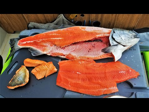 *Catch And Cook!!* KING Salmon TASTE TEST: Belly, Back & Tail