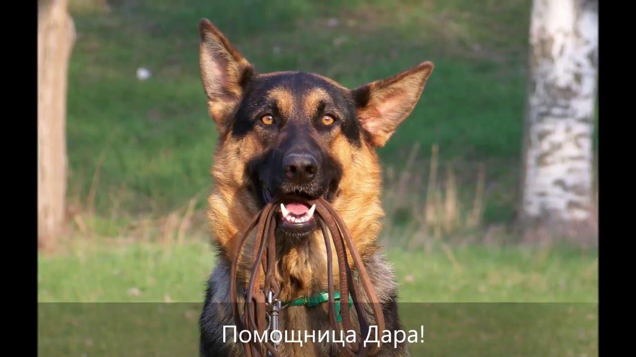 Официальный сайт корма для собак практик, натуральный сухой корм. Бесплатная доставка. Отзывы, состав, дозировка. Корм для пиютов и питомников. Гипоаллергенный корм практик, practik киев, одесса, днепр, харьков.