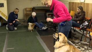 Kennel Club Seminar