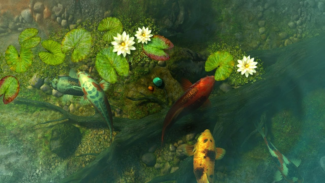 Koi pond garden 3d screensaver live wallpaper hd youtube for Koi pool water gardens blackpool