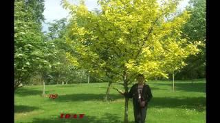 JLS Proud Moto Blanco Club Mix видео Online - Ceo-english ru