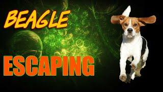 Beagle Escape | 0123amyrose's Channel