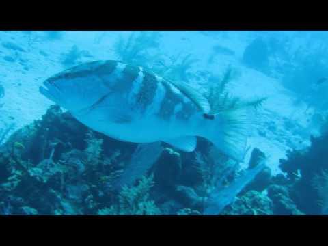 Cayman Brac 16