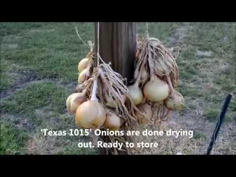 Texas Spring Organic Vegetable Garden Update 8 of 8