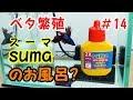 sumaスーマ 水槽立ち上げ ベタ ヒレの再生 の動画、YouTube動画。