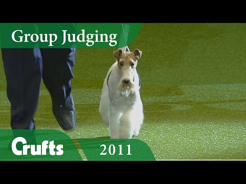 Wire Fox Terrier wins the Terrier Group Judging at Crufts 2011 | Crufts Dog Show