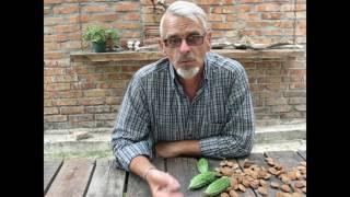 Осенние удобрения (простые минеральные)