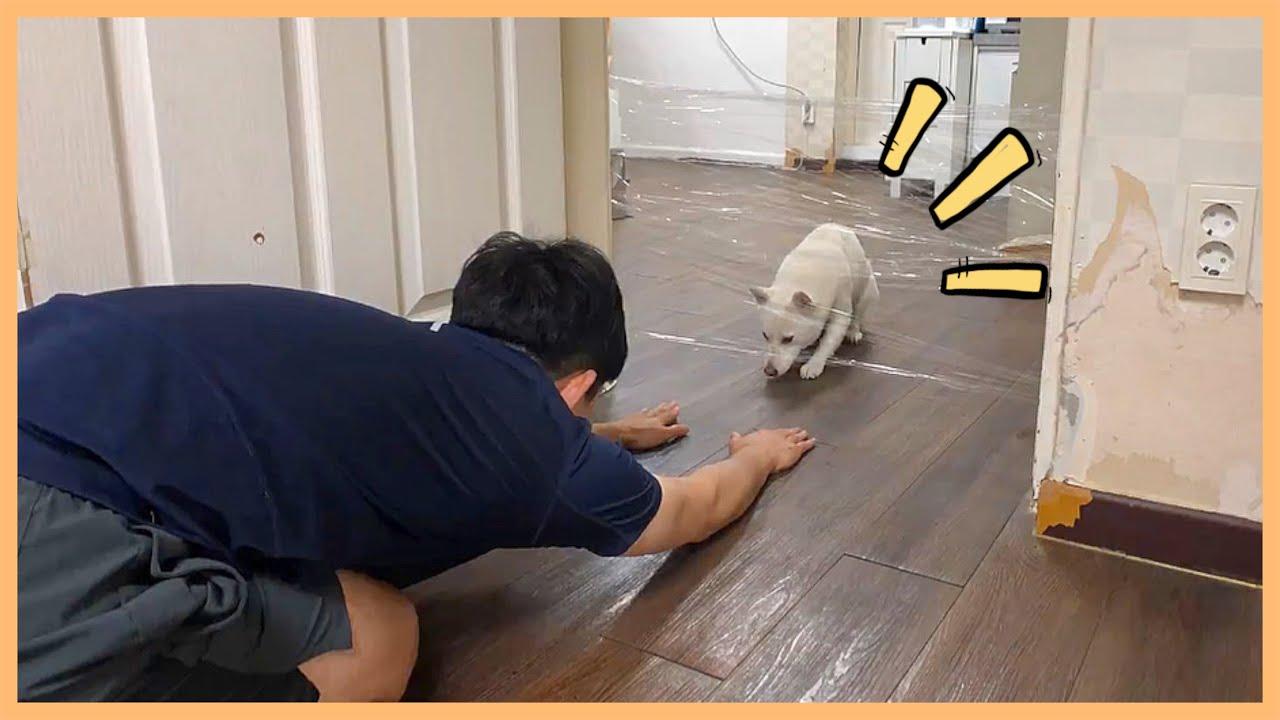 강아지한테 투명벽 통과 방법 알려줬더니ㅋㅋ (invisible wall challenge)