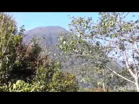 Bhojpur chaukidanda 9 okhree part 1 cardamom farm