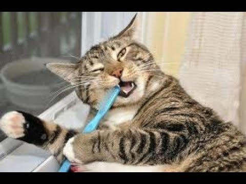 TRY NOT TO LIE US that you DIDN'T LAUGH AT THESE - Awesome CATS, DOGS and much more!